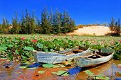 image of sand lilies  - Beautiful lake with lotus and boats - JPG