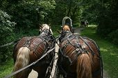 stock photo of wagon  - A team of draft horses pull a wagon in a wagon train - JPG