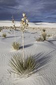stock photo of square mile  - White Sands is located in the Tularosa Basin with 275 square miles of  the largest gypsum dunefield in the world - JPG