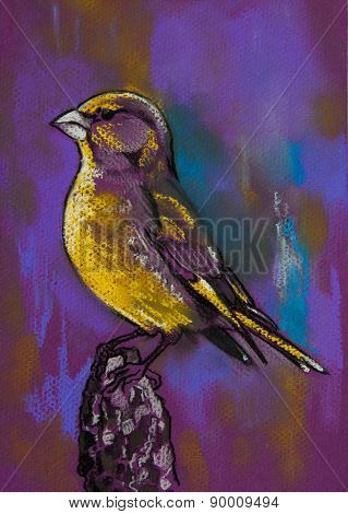 Beautiful parrot on purpel background