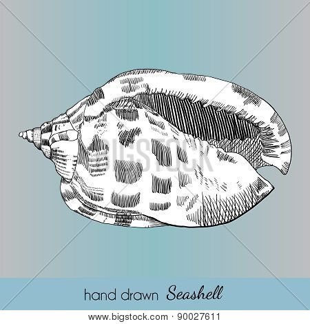 Hand Drawn Marine Seashell.