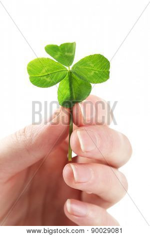 Female hand holding green clover leaf, isolated on white