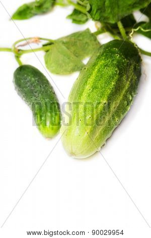 two green cucumber on a white background