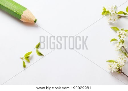 beautiful flowers cherry on branches with green pencil on white background