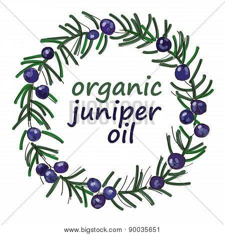 Organic Juniper Oil Drawing Wreath Vector
