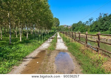 Narrow rural trail between green trees and small stream in summer in Piedmont, Northern Italy.