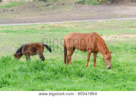 Ponies In A Field