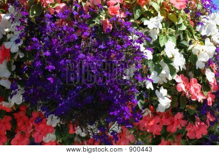 Hanging Basket Closeup