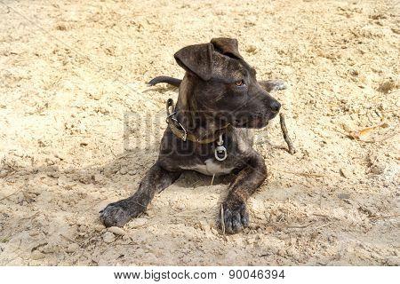 Cute Neapolitan Mastiff Puppy Laying On A Ground