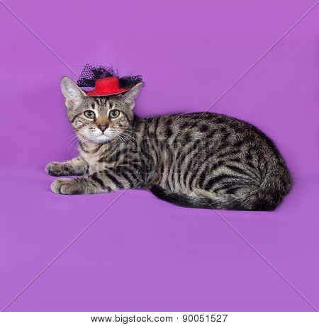 Tabby Kitten In Red Hat Sits On Lilac