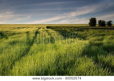 Idyll Countryside View Of Lush Meadows