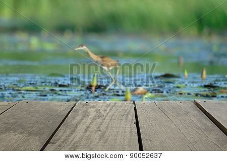 Defocused And Blur Image Of Terrace Wood And Bird In The Pond (b