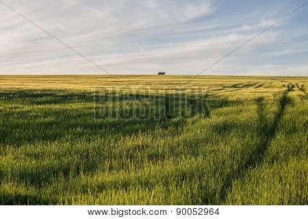 Meadow Landscape In The Morning