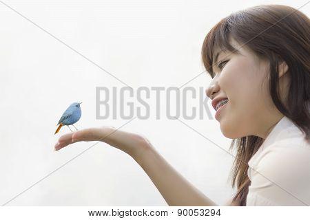 Young Bird Nestling .chick Baby Plumbeous Redstart (rhyacornis F