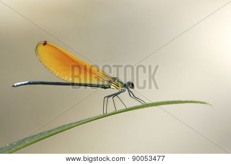 Beautiful Dragonfly On Green Leaves