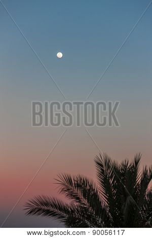 Full Moon in daylight sky and palm