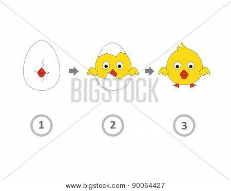 Chick From Egg Info Graphics