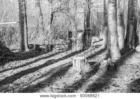 Forest And Shadows