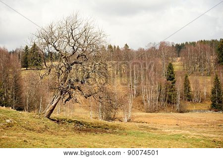 Spring Landscape In Sumava