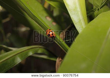 Black Spotted Bug