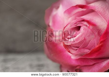 Rose On Grey Wood