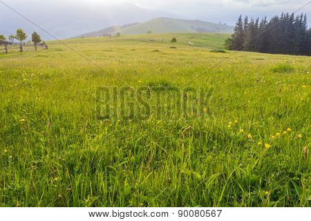 Mountain Pasture In The Early Morning