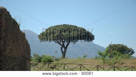 Italian Tree