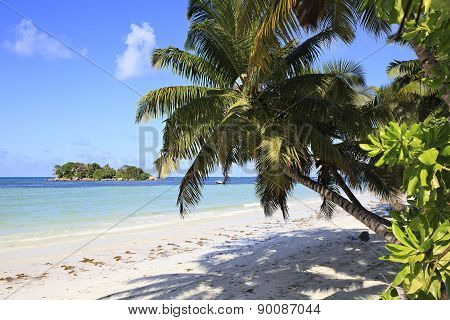 Beautiful beach Cote DOr and palm tree