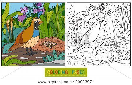 Coloring Book (quail)