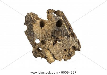 Driftwood Isolated On White Background.