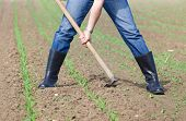 picture of hoe  - Close up of farmer - JPG