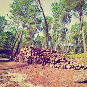foto of afforestation  - Logging in the Forest Portugal Retro Effect - JPG
