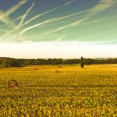 image of sprinkler  - Sprinkler Irrigation for Sunflower in Southern France at Sunset Vintage Style Toned Picture - JPG
