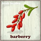 stock photo of barberry  - Hand drawing illustration of barberry - JPG