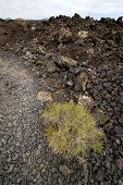 picture of volcanic  - stone in los volcanes lanzarote spain volcanic timanfaya rock sky hill and summer - JPG