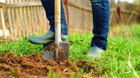 stock photo of spade  - woman is digging the ground at her garden using a spade - JPG