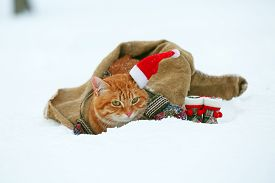stock photo of blanket snow  - Cute red cat with Santa hat wrapped in blanket on snow background - JPG