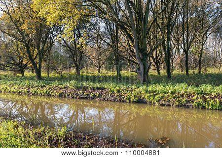 Trees At The Edge Of A Narrow Stream