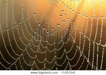 Web in dew and sun rays