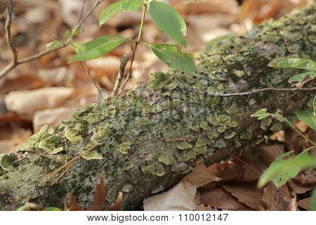 Moss on a tree branch