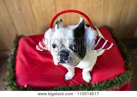 Dog Dressed For Christmas