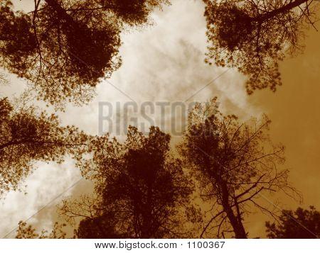 Sepia Skys