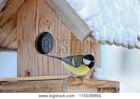 The Great tit bird (Parus major) on the wooden bird feeder with snow covering its roof during the Winter in Europe