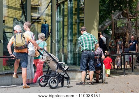 Visitors Admiring Apes In The Zoo Of Antwerp