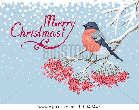 Christmas Card with Bullfinch and rowan
