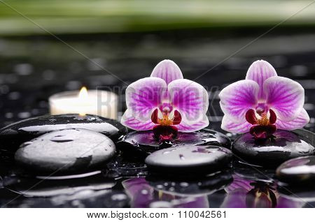 Still life with two orchid with white candle on therapy stones