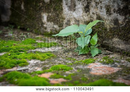 Little Tree And Moss Green Ferns On Brick Wall