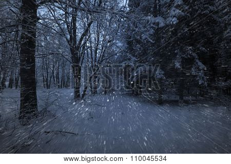 View of night park and many snowflakes