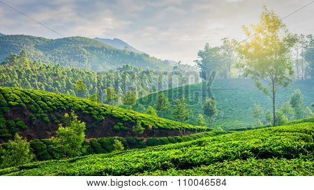 Kerala India travel background - panorama of green tea plantations in Munnar, Kerala, India in the morning on sunrise