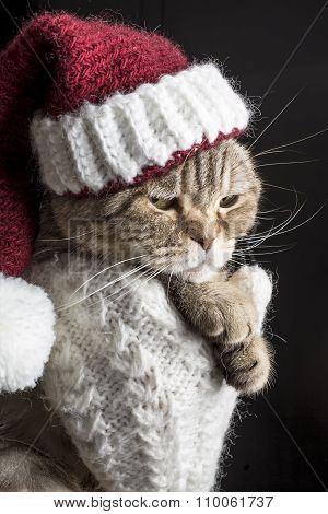 Funny Sad Cat In A Christmas Hat Of Santa Claus